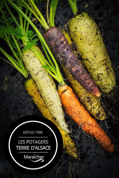photo pub maraicher alsace potager bio photographe maetz cedric